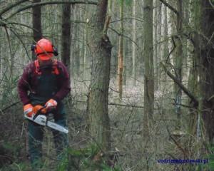 Wytniesz drzewo bez zezwolenia? Łagodniejszy wymiar kary