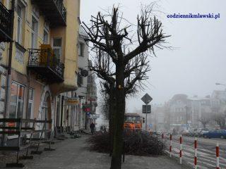 Drzewa na Starym Rynku już ostrzyżone na święta