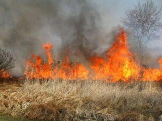 Ugaszone pożary i uratowane koty