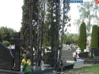 Pożar drzew na cmentarzu parafialnym w Szydłowie
