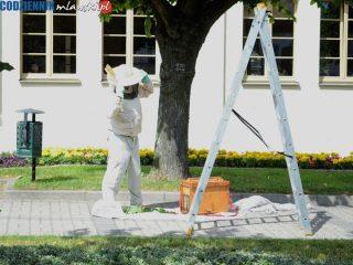 Pszczoły obsiadły lipę przy ratuszu