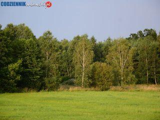 Czy kończy się ustawowa ochrona drzew w Polsce?