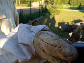 Straż usuwała gniazda groźnych owadów