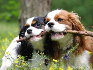 Po ludzku o psich sprawach, opieka, czipowanie, kastracja