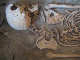 Tajemnica ludzkich kości odnalezionych w Nosarzewie pozostaje nie odkryta