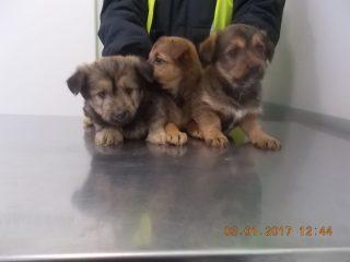 Osiem psiaków czeka na swoich właścicieli lub na nowy dom