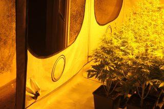 Kryminalni zabezpieczyli narkotyki warte ponad 135 tysięcy złotych.