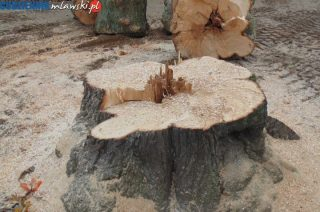 Zmieniono zasady wycinki drzew