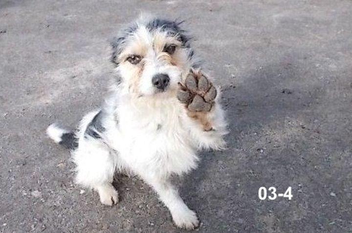 Dziesięć psów trafiło w marcu do schroniska