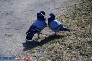 Pierwsze wiosenne flirty w parku