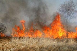 Największa liczba pożarów traw przypada na marzec i kwiecień