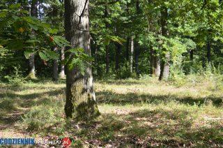 Posadź las i weź pieniądze – nabór wniosków kończy się w piątek