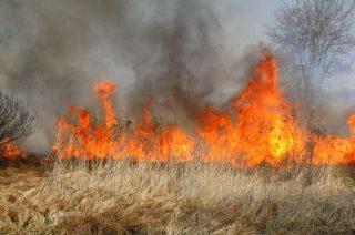 Wypalanie traw jest naprawdę niebezpieczne, a także niedozwolone!