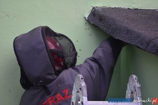 Strażacy mają już dużo zgłoszeń o zagrożeniach związanych z owadami