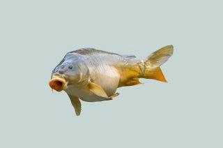U nas to tylko ryba nie bierze…
