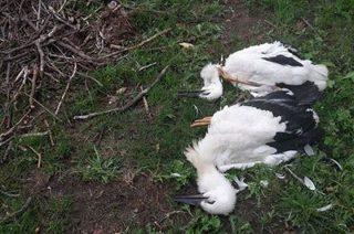 Trzy śmiertelne ofiary wichury w powiecie