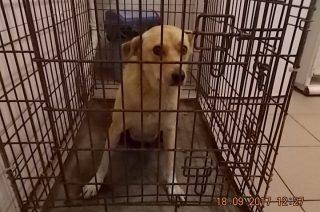 Kolejne sympatyczne psiaki czekają na adopcję