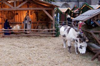 Żywa szopka i inne świąteczne atrakcje już w weekend na mławskim rynku