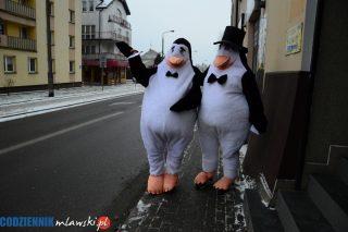 Co robią dwa pingwiny na ulicach Mławy?