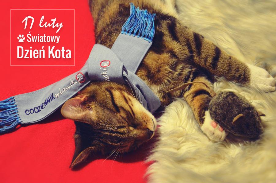17 luty Światowy Dzień Kota kot domowy kot Dziumbal pozdrawia czytelników
