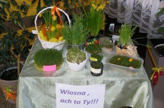 Własnoręcznie wyhodowali rośliny. Jest wiosenna wystawa