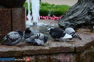 Mam taki gust wypaczony, że lubię wrony. I  gołębie