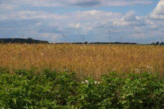 """Wnioski na """"Modernizację (obszar D)"""" i """"Restrukturyzację małych gospodarstw"""" do 30 czerwca"""