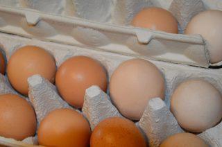 Pałeczki salmonelli na skorupkach jaj. Główny Inspektorat Sanitarny ostrzega