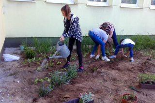 Uczniowie SP nr 7 pomagają pszczołom