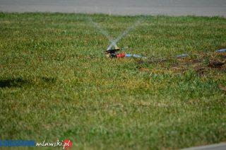Ogrody deszczowe sposobem na ulewy i susze?