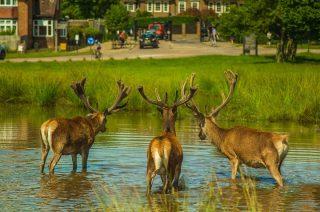 Ogólnopolski konkurs wabienia jeleni rozpoczęty