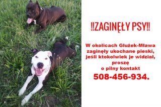 W okolicach Głużek-Mława zaginęły psy. Prosimy o pomoc!