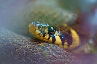 Wąż w sklepie