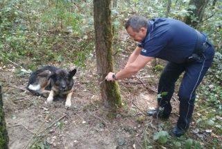 Pies zaplątał się we wnyki, uratował go dzielnicowy