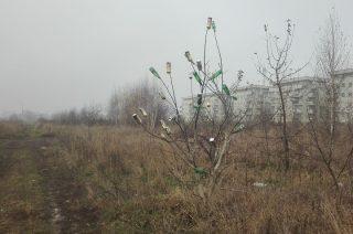Niezwykłe drzewko szczęścia rośnie przy blokach na OKM
