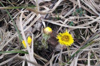 Wiosna poczyna sobie w lesie jeszcze nieśmiało