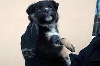 Sympatyczny czarny szczeniak czeka na właściciela