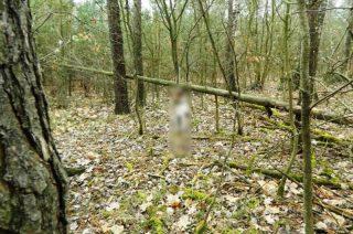 Policja poszukuje sadysty, który powiesił w lesie psa! Drastyczne zdjęcia! [18+]