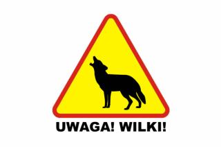 Gmina Chorzele ostrzega przed wilkami. Są sposoby!