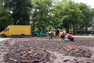 40 000 begonii w parku