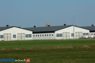 Poważny wypadek na fermie drobiu w Rochni