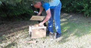 Strażacy zabezpieczyli i przekazali pszczelarzowi rój dzikich pszczół