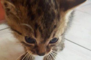 Sympatyczne kotki do przygarnięcia