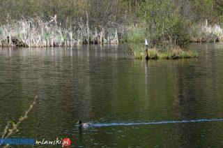 Tragedia nad wodą. Utonął 15-letni chłopiec