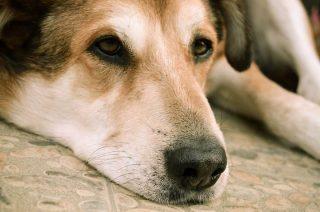 Pies trafił do lecznicy, jego dwaj kaci do aresztu
