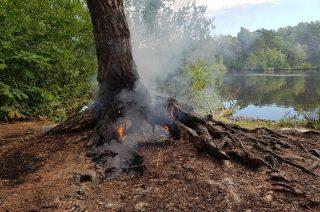Podpalić drzewo w lesie? Dla niektórych to fraszka