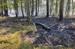 Powtórny pożar lasu w Krajewie to też podpalenie? [zobacz film]