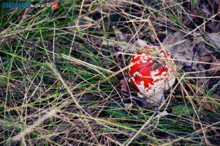 Spacer śladami jesieni – malownicze okolice Mławy