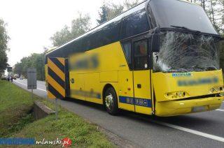 """Strzegowo. Zderzenie łosia z autobusem na """"siódemce"""""""