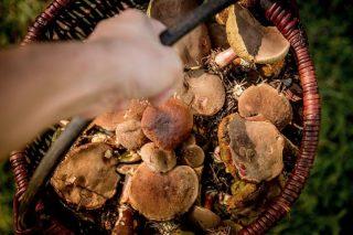 Zaginiony wczoraj grzybiarz odnaleziony w Brzozowie Majach